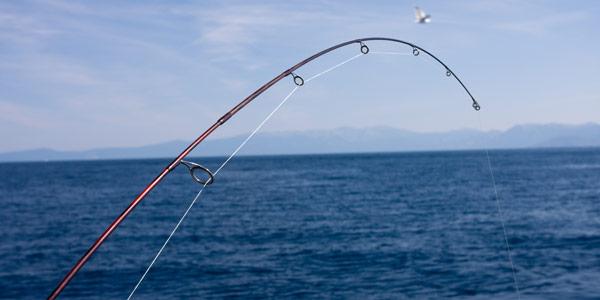 Blue ribbon fishing charters lake tahoe for Lake tahoe fishing