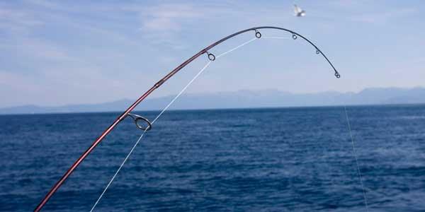 Blue Ribbon Fishing Charters