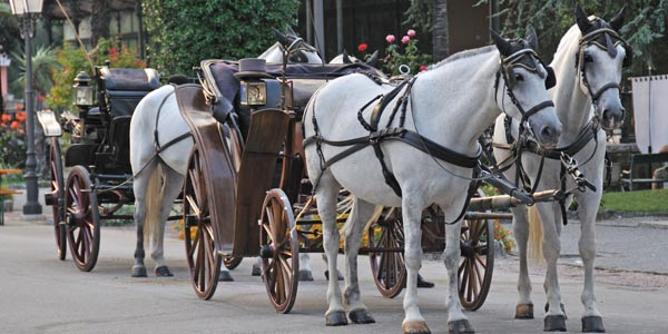 Lake Tahoe Carriage Tours