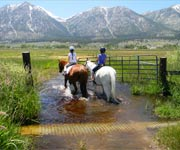 Lake Tahoe Horseback Stables And Trail Rides