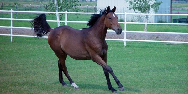 Sheridan Creek Equestrian Center Gardnerville Nevada